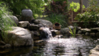 Waterfall Stream Pond Boulders