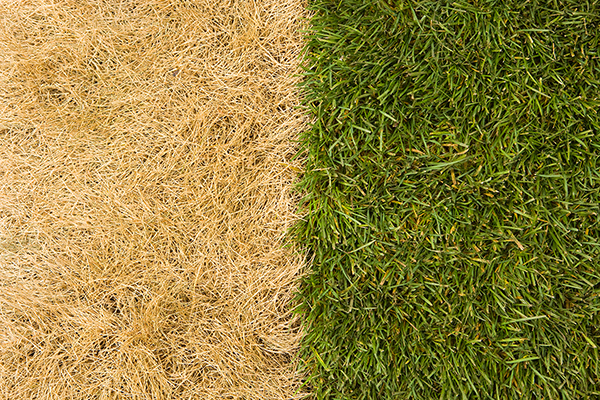 NutraCare before and after turf disease
