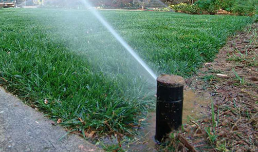 Atlanta Commercial Landscape Management Services